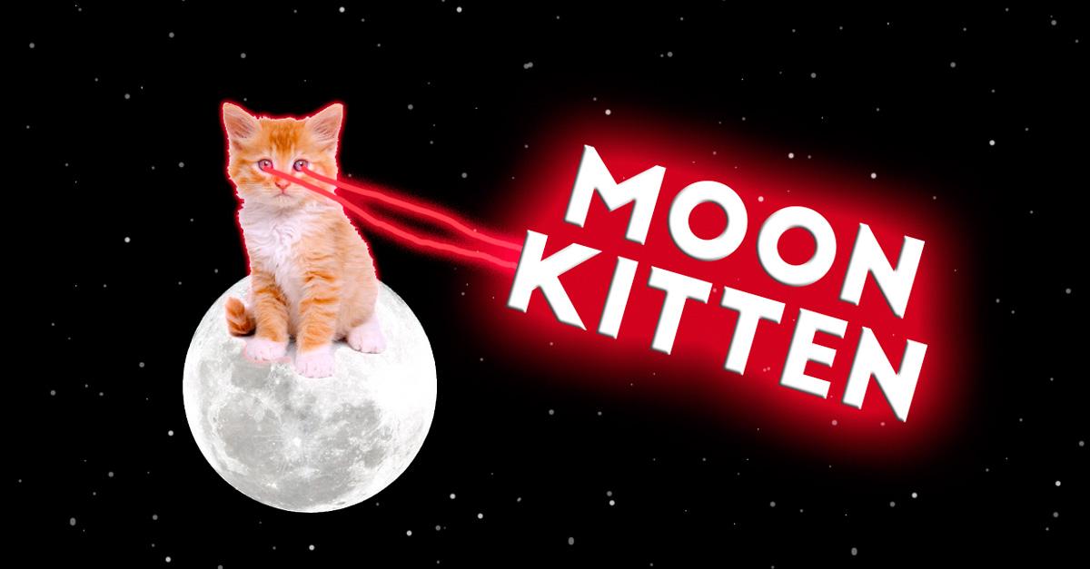 Moon Kitten — Protector of the Moon