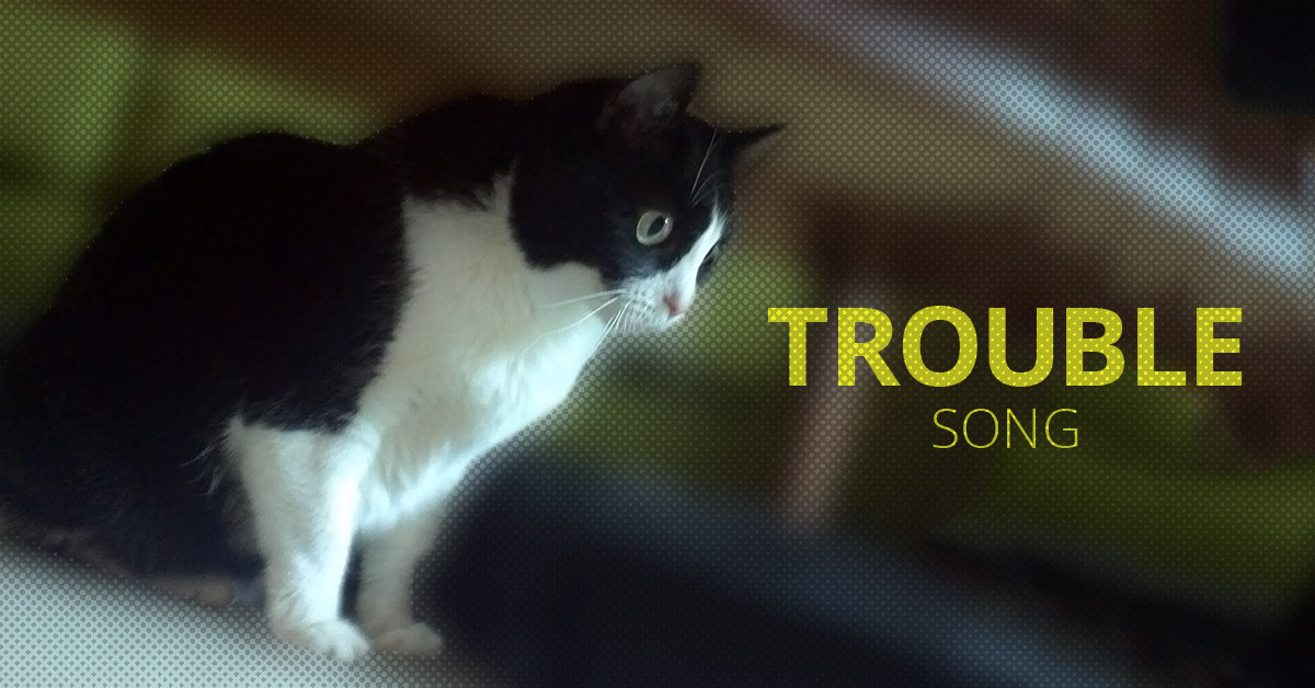 Trouble Cat Song